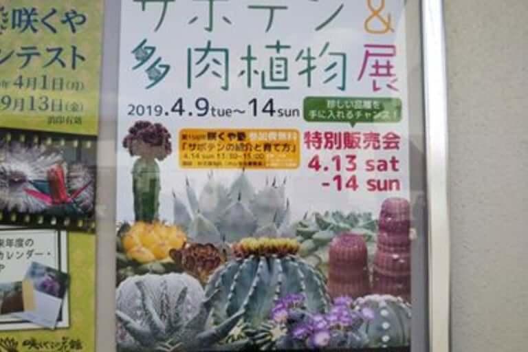 鶴見緑地多肉イベント